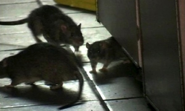 Rats Entered Corpses Through Vagina And Anus At D.C. Hospital, Ex-Worker Says