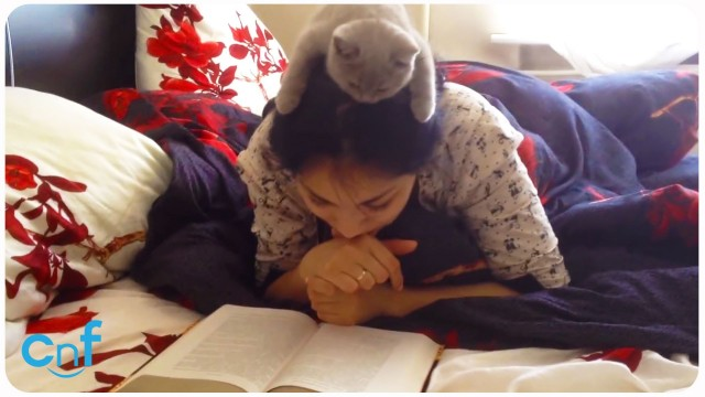 Girl Reads With Kitten on Her Head