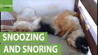 Snoring dog sleeps in hilariously awkward position