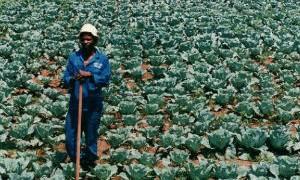 Black Farmers Shut Out Of $10 Billion Legal Marijuana Business